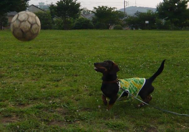サッカー⑤.JPG