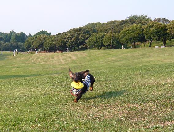 根岸森林公園②.JPG