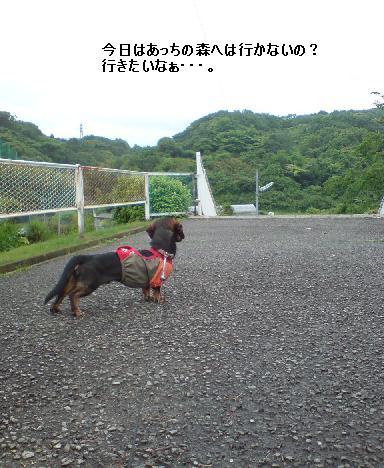 雨散歩3.JPG